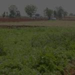 ยุโรปปิ๊งระบบคุมมาตรฐาน (EL) ของไทย ส่งออกผักสดผ่านฉลุย